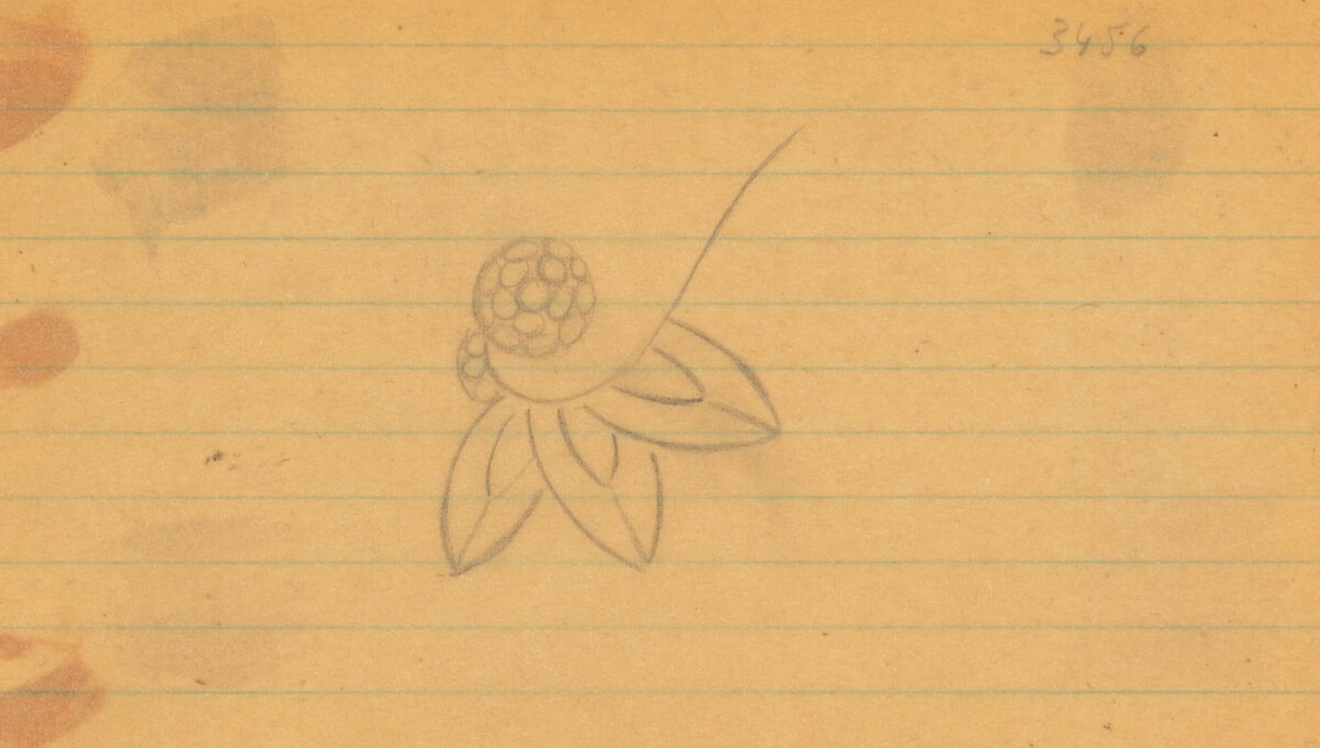 Sketch of the Lily Cluster motif